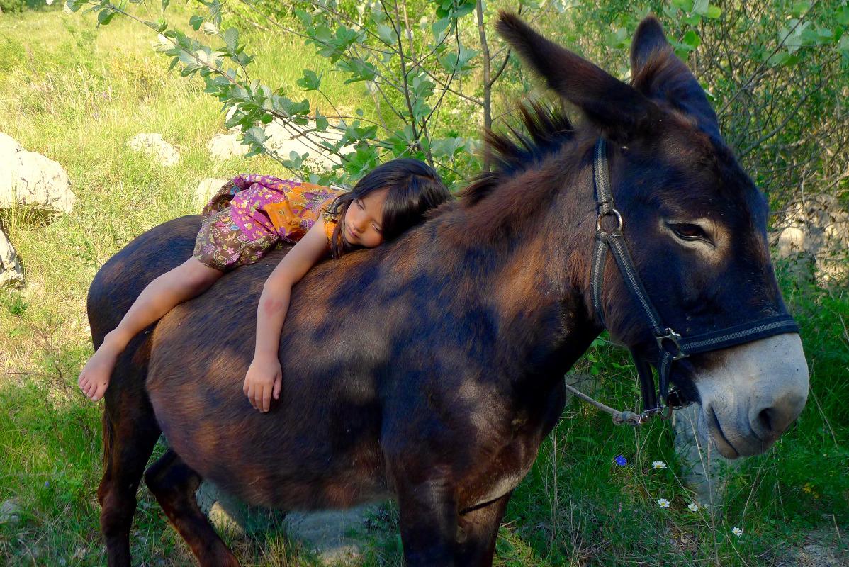 Honneur aux ânes  Enfants-nature-decouverte_1488576875